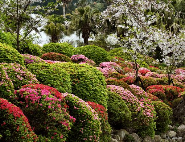 colorful plants for landscaping